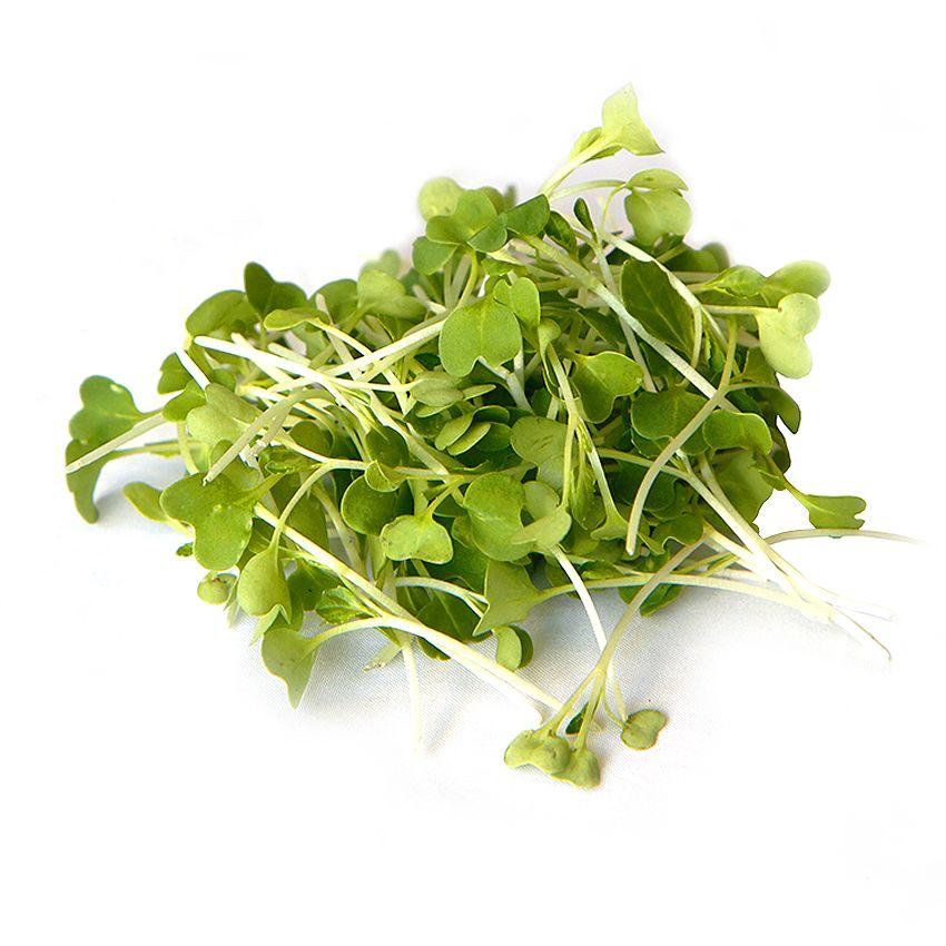 Zielone pac choi - Zioła cięte, warzywa, grzyby, owoce egzotyczne i przyprawy Freshmint Łódź