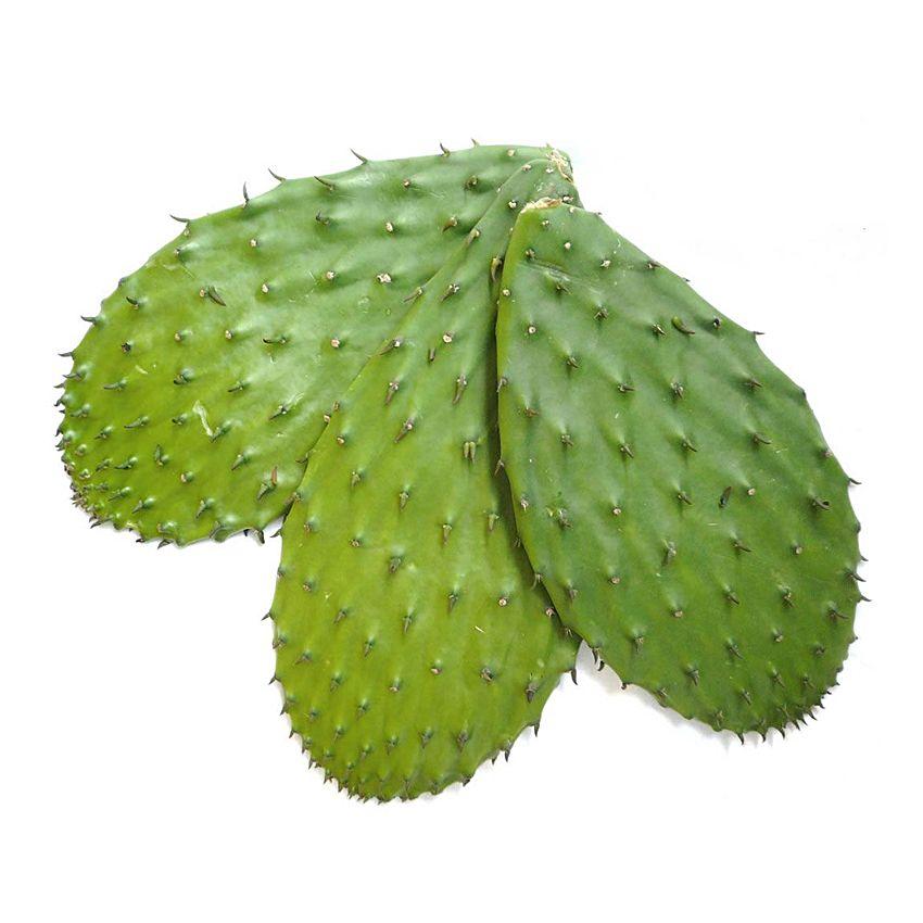 Liście kaktusa - Zioła cięte, warzywa, grzyby, owoce egzotyczne i przyprawy Freshmint Łódź