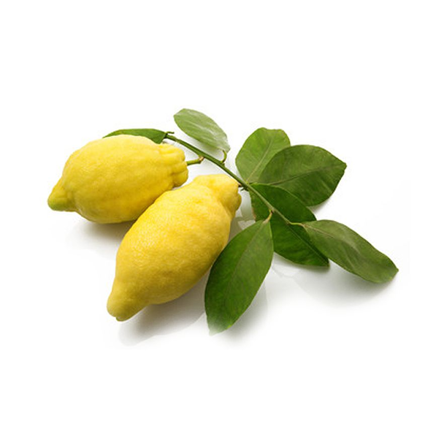 Cytryna amalfi z liściem - Zioła cięte, warzywa, grzyby, owoce egzotyczne i przyprawy Freshmint Łódź