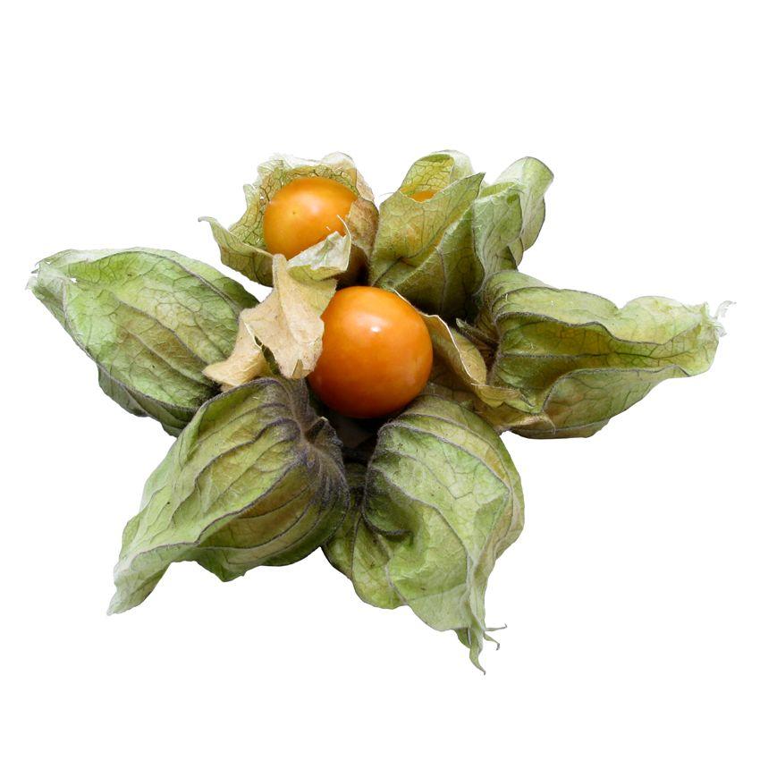Physalis - Zioła cięte, warzywa, grzyby, owoce egzotyczne i przyprawy Freshmint Łódź